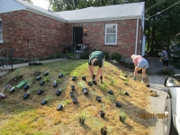 Jeanne placing plants