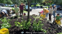 Volunteers planting and mulching