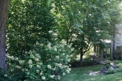 20160618_yard5_native_garden_tour_04 - Edited