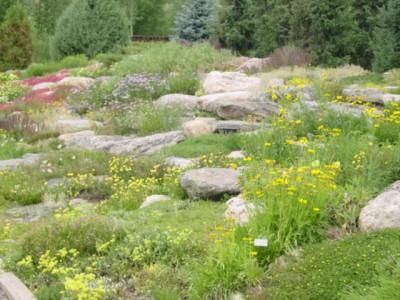 Steamboat Springs Botanical Garden flowers