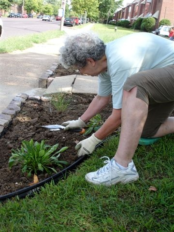 penny holtmann planting coneflower