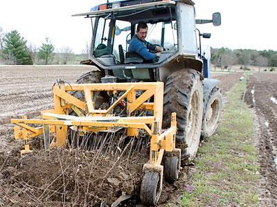 Harvesting tree seedlings at the Missouri state tree nursery