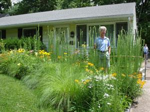 Garden of native plants
