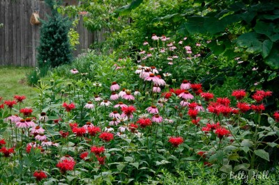 Bee balm and coneflower. Photo by Betty Hall.