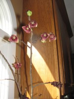 Pawpaw branch forced to bloom in February by bringing it inside