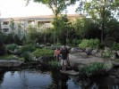 Chris Siewig and his backyard water feature