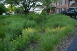 Front yard of the 2010 landscape challenge showing prairie dropseed grasses