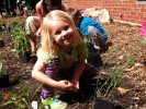 Young student at Principia School helping to plant native plants