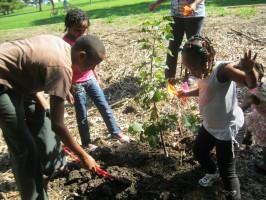 Planting the tree in Wangari Maathai's honor