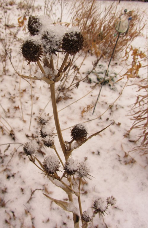 plant seedheads with snow on them