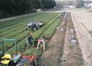 Workers at the George White state nursery