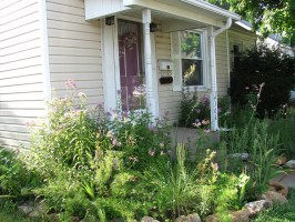 A beautiful yard landscaped with native plants