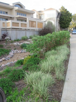 Rainscaping in the Sommet Place subdivision