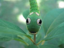Spicebush butterfly caterpillar