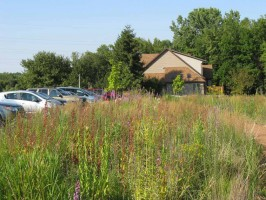 Wild Center and pollinator prairie at the national Wild Ones office