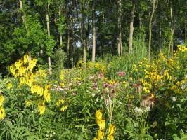 Native plant garden at the Wild Center