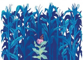 Drawing by Micah Lidberg of a monarch butterfly on an isolated milkweed plant surrounded by corn