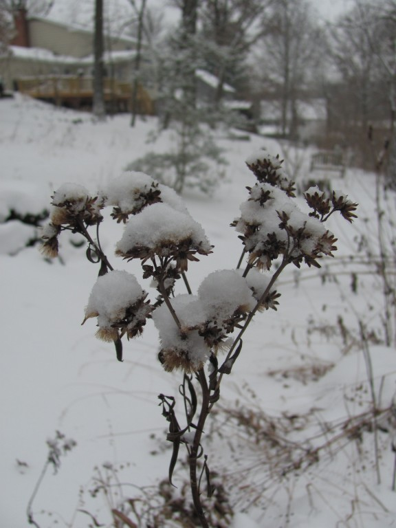 seed heads with snow