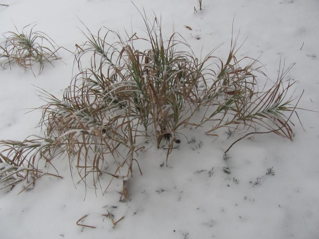 Foliage in snow