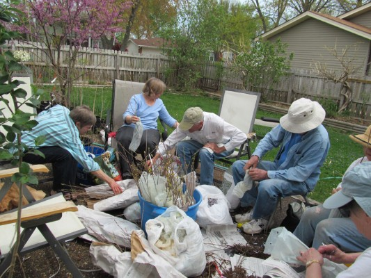 Wild Ones members wrap seedlings to give away at Earth Day