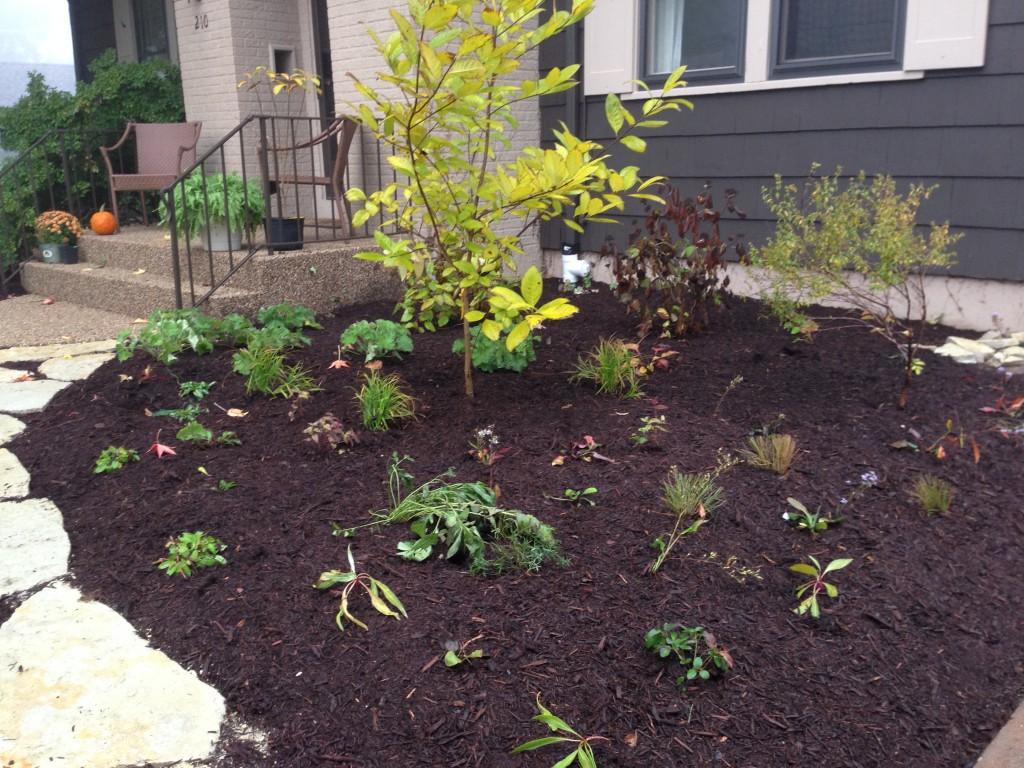 Fringe tree and native perennials