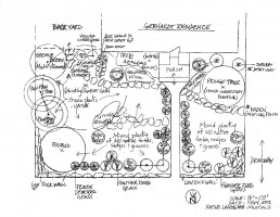Planting drawing done by Simon and Monica Barker for the Gebhardt yard