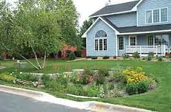 A residential raingarden