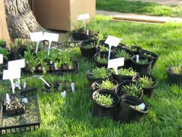 Native plants ready for planting