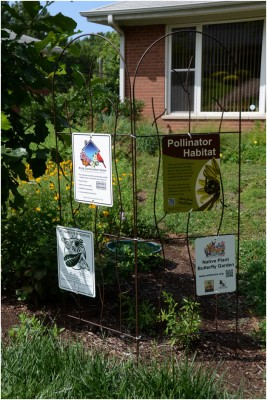 Native landscaping certification signs in Fran Glass' yard