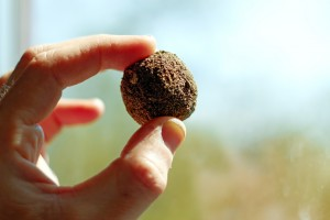 Fingers holding a ball of soil with embedded seeds