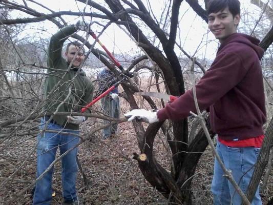 Students cutting a large honeysuckle bush