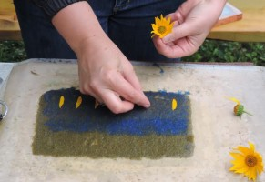 For variety, Megan added some blue-dyed fibers and ox-eyed sunflower (Heliopsis helianthoides) to the original paper pulp.
