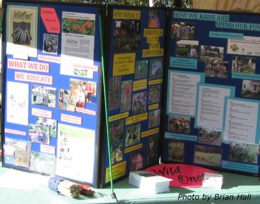 Wild Ones information table