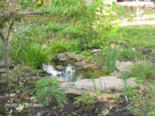 Bill's backyard stream
