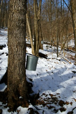 Maple sugaring - photo courtesy of Missouri Department of Conservation