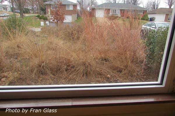 Room with a view - prairie dropseed