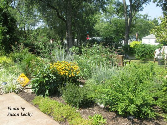 Native plants in Susan Leahy's yard