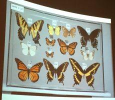 butterfly_box_22