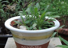 wild-pink-container-few-months-old-kb