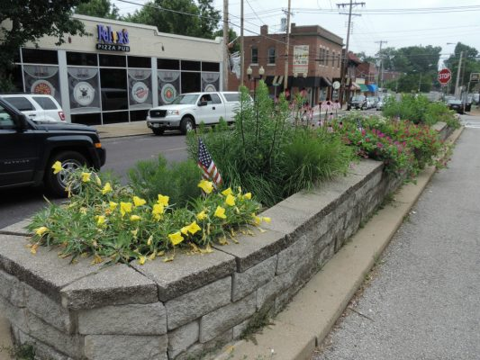Native plants in Dogtown