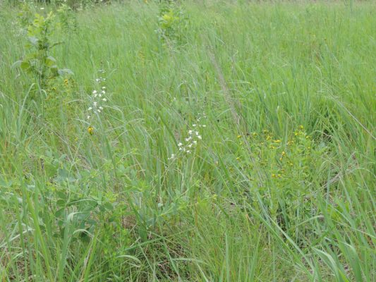Native plants at Londell School
