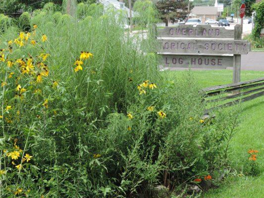 Native plants at Overland Historical Society