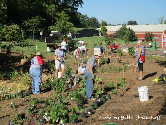 Many people gardening