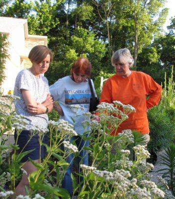 three women in a garden