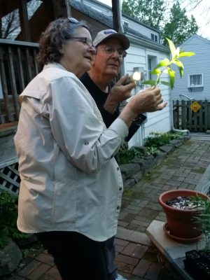 A woman and a man looking for eggs on plant