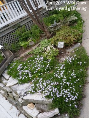 rocks and flower landscaping
