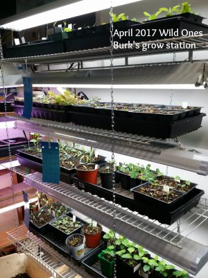 Plants growing in stacked rows