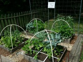 Vegetables in square plots