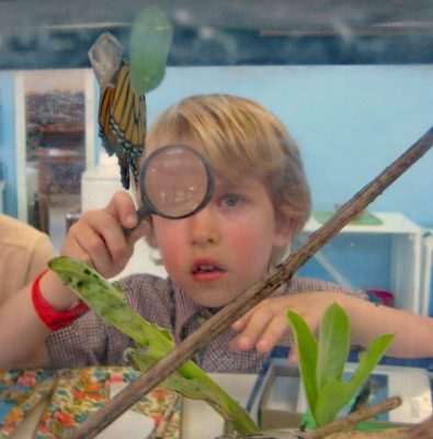 Boy with magnifying glass looking at caterpillars