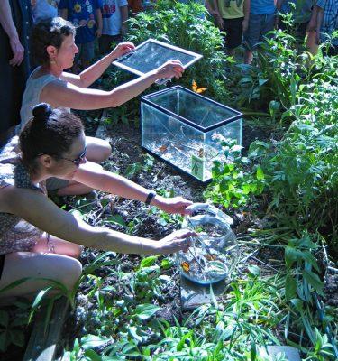 Two women releasing monarchs